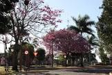 Foto da Cidade de São José das Palmeiras - PR