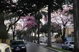 Foto da Cidade de Nova Odessa - SP